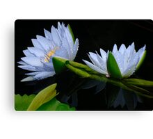Water Lilies 10 Canvas Print