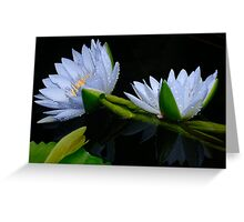 Water Lilies 10 Greeting Card