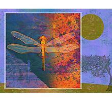 Flaming Dragonfly Photographic Print