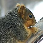 Red Squirrel Portrait by lar3ry
