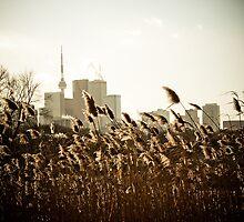 Toronto Vs Nature by StuBees