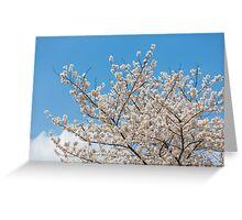 Cherry blossom in Korea Greeting Card