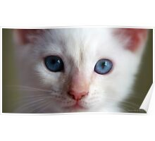Baby Blue Eyes Poster