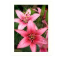 Pink Beauties-early morning flowers Art Print