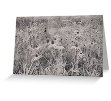 Untitled IR Greeting Card