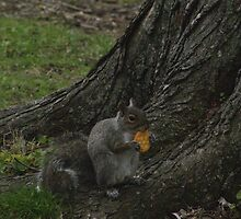 Sunday Squirrel Brunch by 4AcePhotography