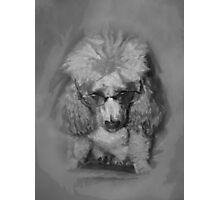 Pooch in Glasses Photographic Print