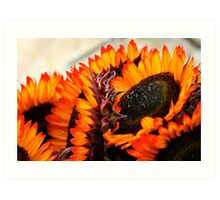 Farmers Market Fiery Sunflowers Art Print