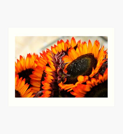 Farmers Market Fiery Sunflowers Art Print