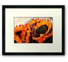 Farmers Market Fiery Sunflowers Framed Print