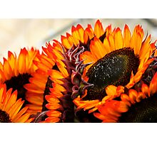 Farmers Market Fiery Sunflowers Photographic Print