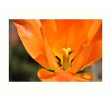 Sunburst Tulip Art Print