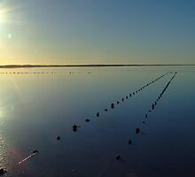 Salt Lake Serenity - Lake Hart SA by Gillian Fennell