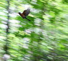 Bird by Farzali Babekhan