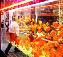 crowded fish tank nyc by kisstiger