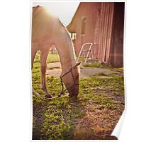 Outside the Barn Poster
