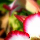 Desert Rose - Beauty of the Garden by Chloe Leplaw
