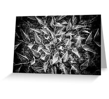 Leafplosion Greeting Card
