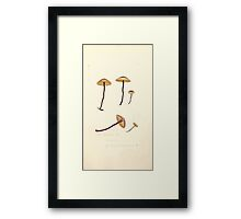 Coloured figures of English fungi or mushrooms James Sowerby 1809 0911 Framed Print