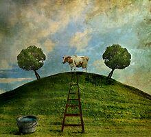 Cow on a hill by Þórdis B.