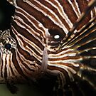 Lionfish by Dave Cauchi