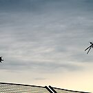 Helicopter and Seagull competing at Albert Park Melbourne by PhilMi