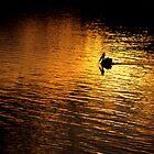 Sunset Pelican by Edeneye