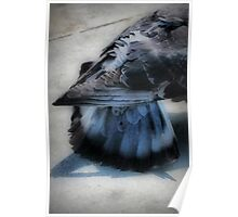 Tail Feathers Poster