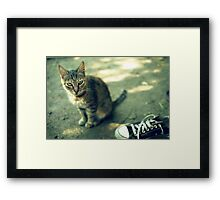 Cat and shoe Framed Print