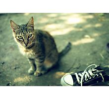 Cat and shoe Photographic Print