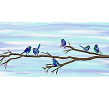 Painted Bluebirds on a Branch Photographic Print