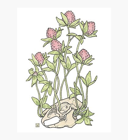 Red Clover All Over Photographic Print