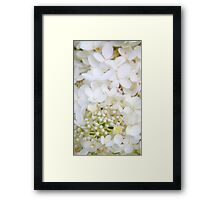Nature's Bridal Bouquet.... Framed Print