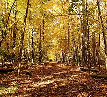 Golden Tunnel by Debbie Oppermann