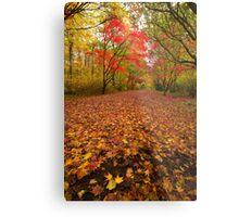 Autumn colour Alice holt forest Metal Print