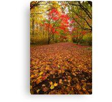 Autumn colour Alice holt forest Canvas Print