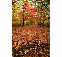 Autumn colour Alice holt forest Photographic Print