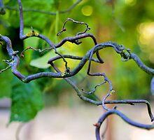 tangled around by Gursimran Sibia
