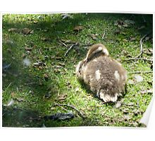 Sleeping Duckling Poster