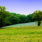 The field before the woods... by DDLeach