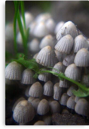Lizard and Mushrooms by Antanas