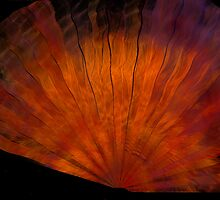 Copper Silk Fan by coppertrees