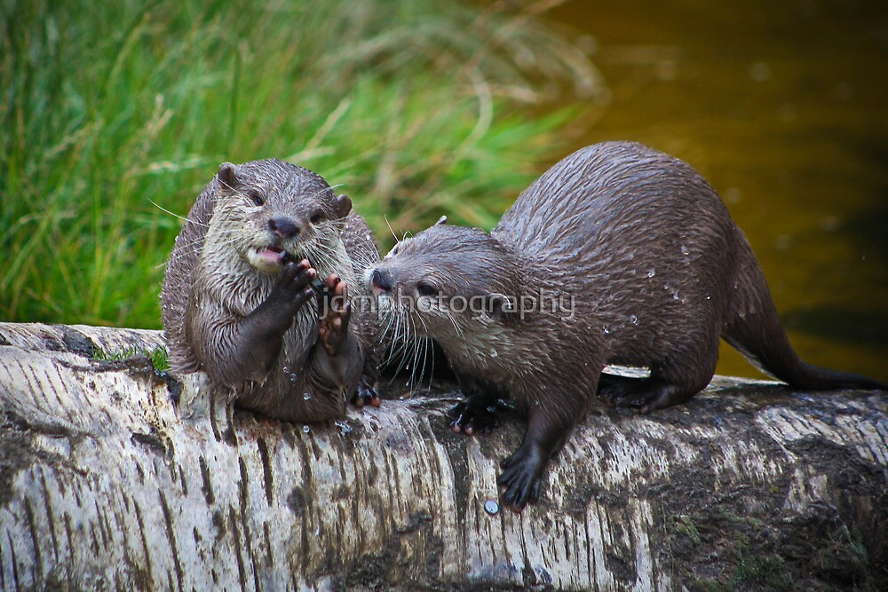 Otter Delight by jdmphotography