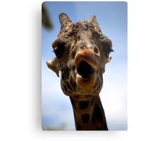 The Giraffe is smirking Metal Print