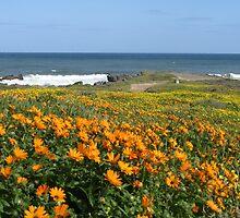 Wildflower season at Kabeljoubank  by Marie Theron