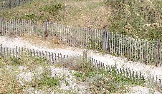 Beach path by zpawpaw