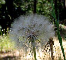 Giant Freaking Seed Head by Chris Gudger