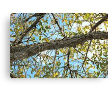 Branches Canvas Print