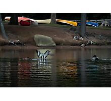 Loons and Colourful Canoes Photographic Print