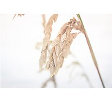 Sea Grass in the Wind Photographic Print